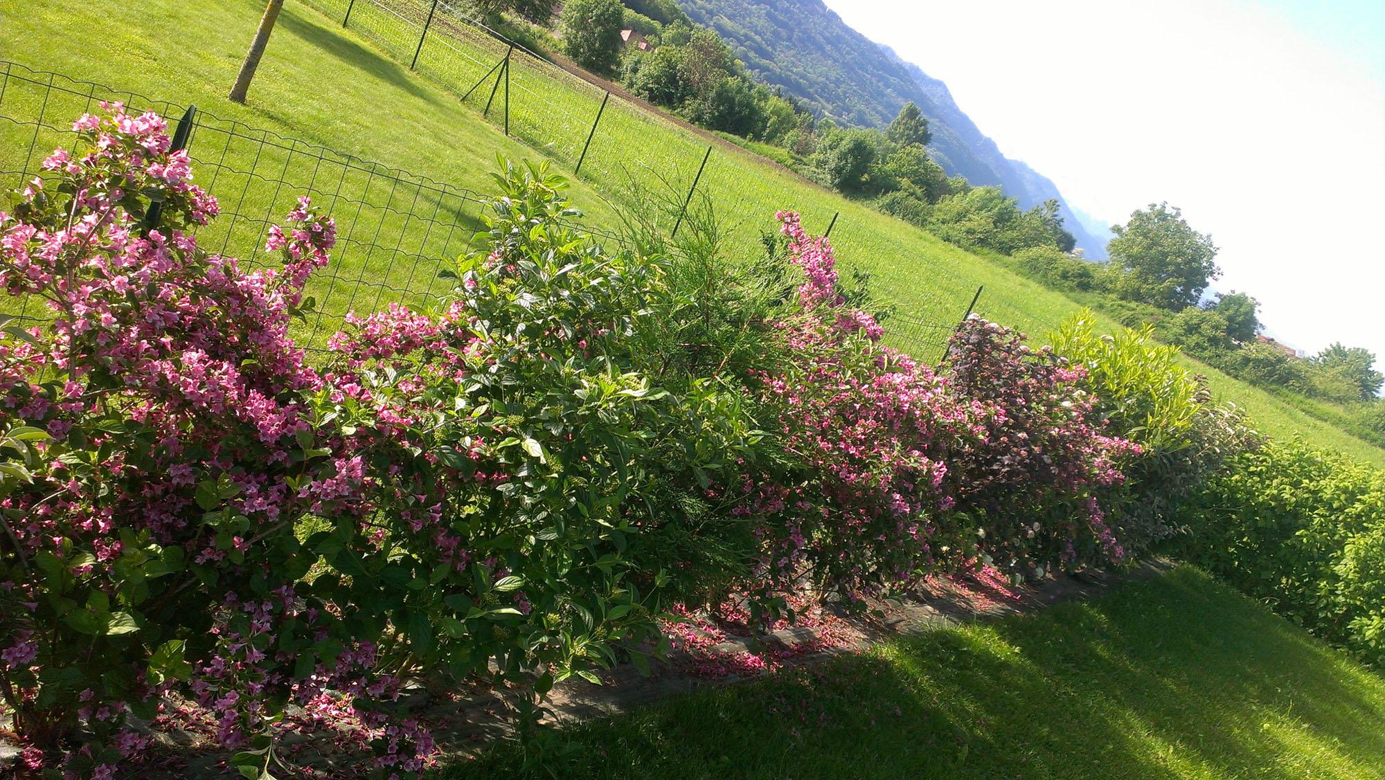 Cr ation et entretien d espace vert l 39 artisan des jardins for Entretien jardin 76